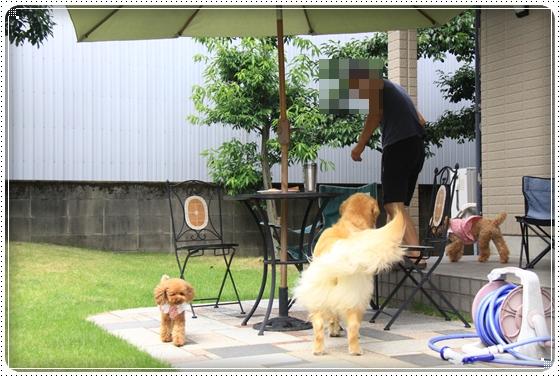 2011,8,17お庭遊び6