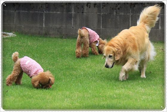 2011,8,17お庭遊び2