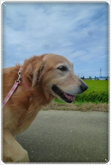 2011,8,19お散歩5