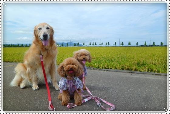 2011,8,19お散歩1