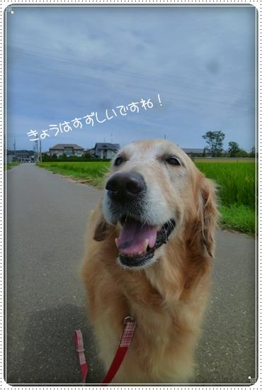 2011,8,19お散歩3