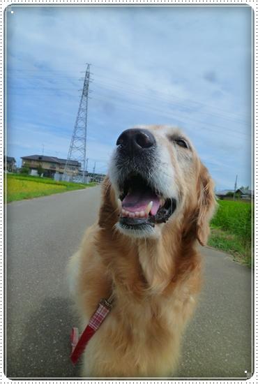 2011,8,19お散歩2
