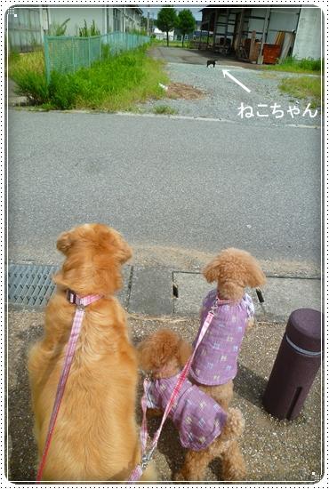 2011,8,19お散歩10