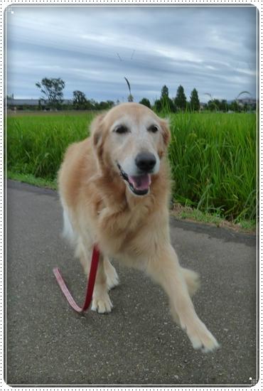 2011,8,21お散歩2