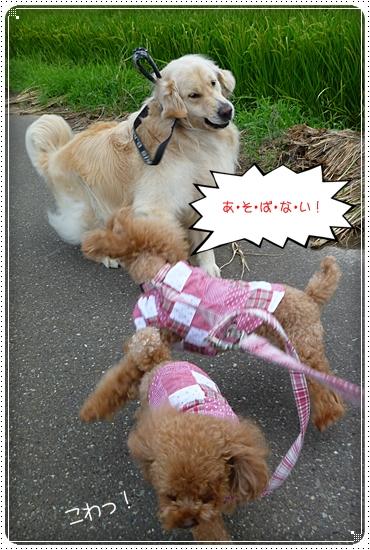 2011,8,22お散歩5