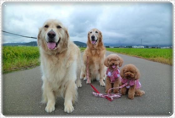 2011,8,22お散歩6