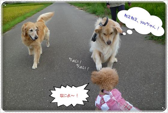2011,8,22お散歩2