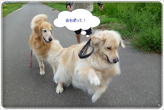 2011,8,22お散歩4