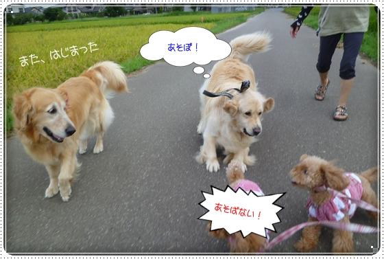 2011,8,22お散歩3