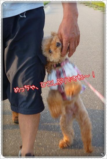 2011,8,28お散歩6