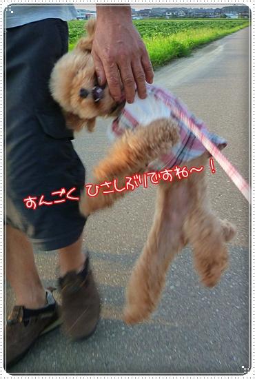 2011,8,28お散歩5