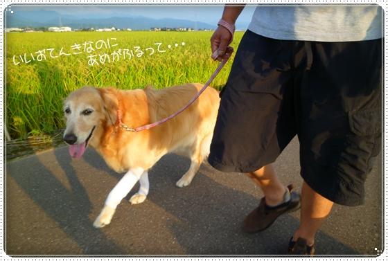 2011,8,28お散歩8