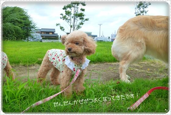 2011,9,3お散歩3