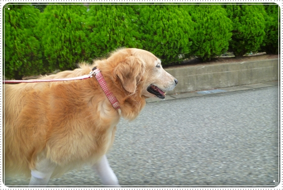2011,9,3お散歩1