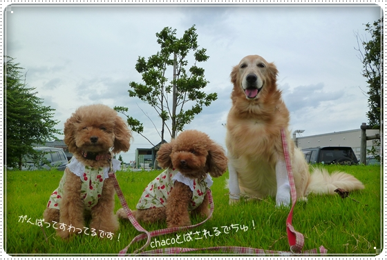 2011,9,3お散歩2