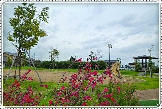 2011,9,3お散歩12