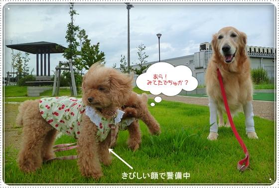 2011,9,3お散歩10