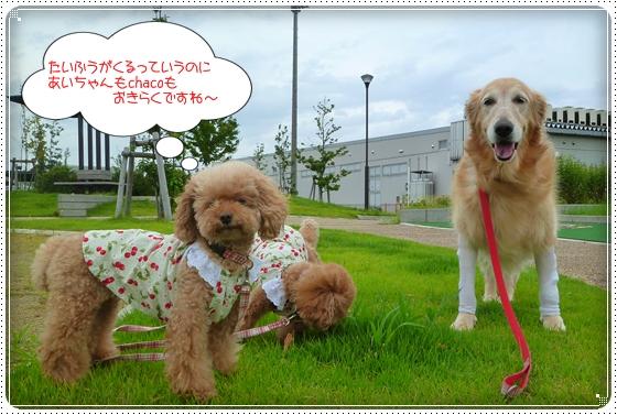 2011,9,3お散歩11