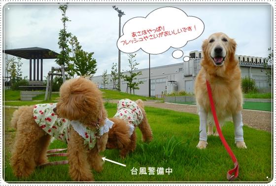 2011,9,3お散歩8