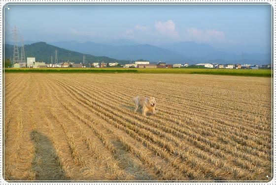2011,9,10お散歩7