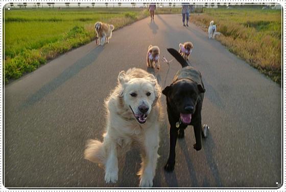 2011,9,10お散歩9