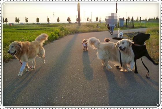 2011,9,10お散歩8