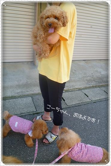 2011,9,10お散歩2