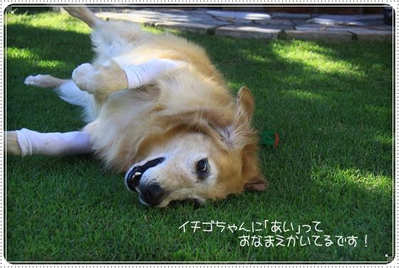 2011,9,15お庭遊び7