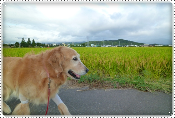 2011,9,19お散歩4