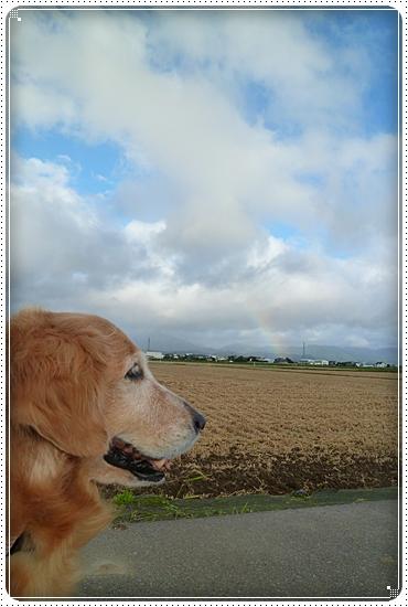 2011,9,19お散歩5