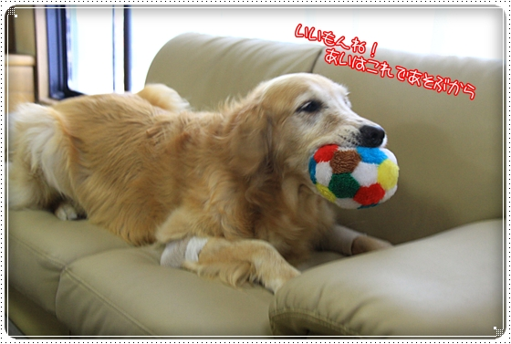 2011,9,19お散歩2