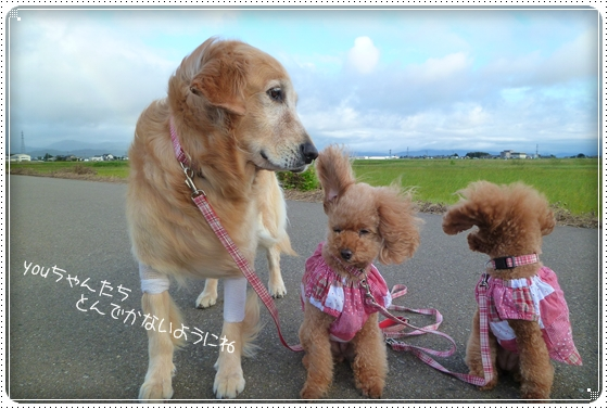 2011,9,19お散歩6