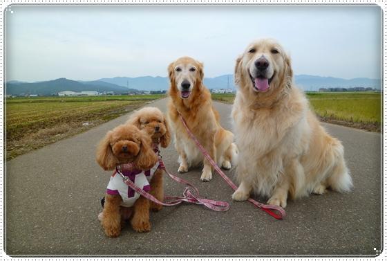 2011,9,26お散歩1