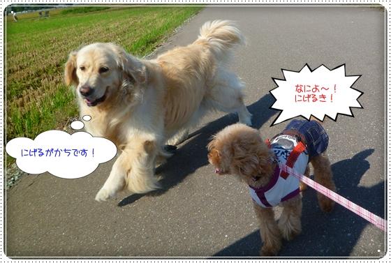 2011,9,27お散歩6