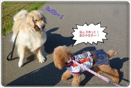 2011,9,27お散歩5