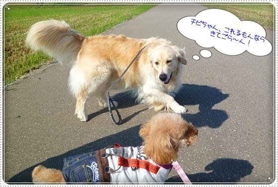 2011,9,27お散歩4