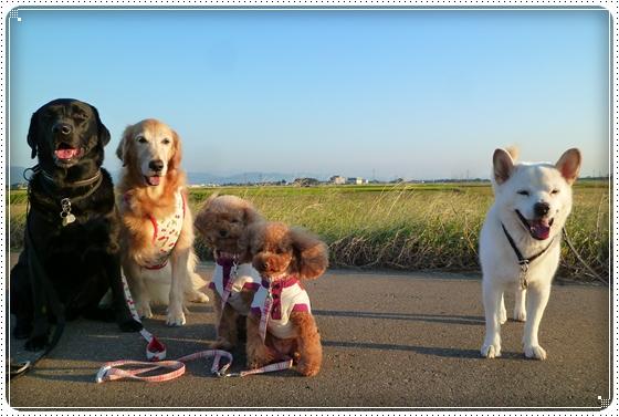 2011,9,27お散歩12