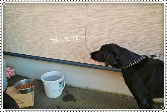 2011,9,27お散歩9