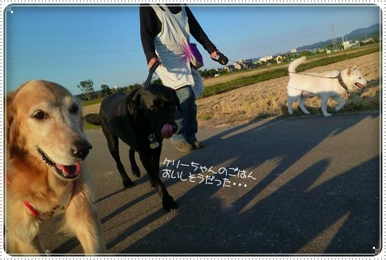 2011,9,27お散歩11