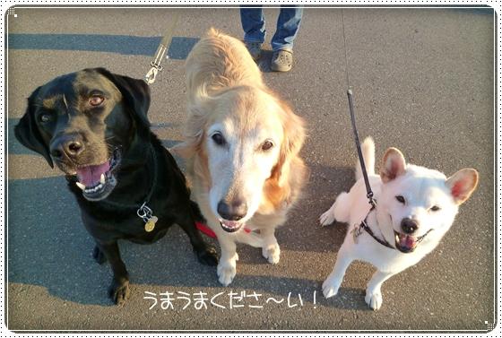 2011,9,27お散歩13
