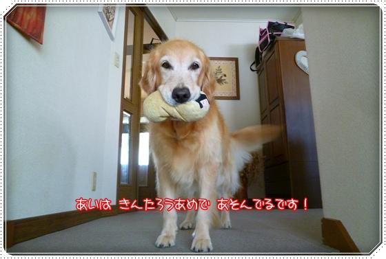 2011,9,28お散歩1