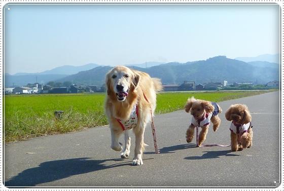 2011,9,28お散歩9