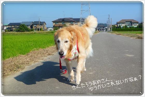 2011,9,28お散歩7