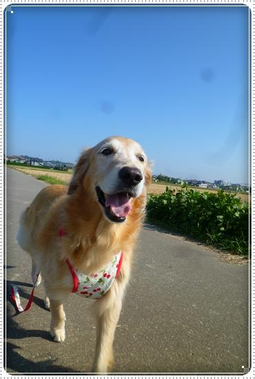 2011,9,28お散歩8