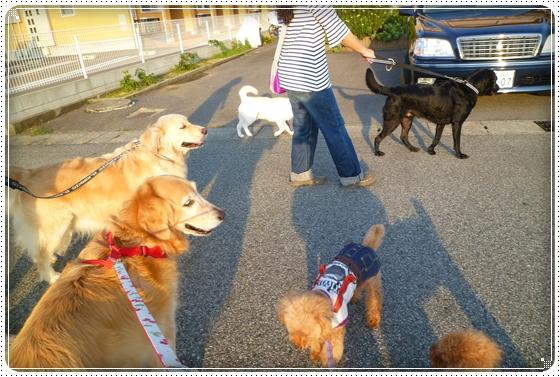 2011,9,28お散歩13