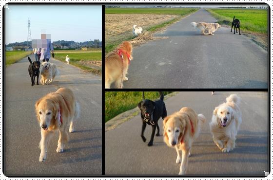 2011,9,28お散歩15