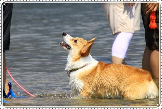 2011,9,30琵琶湖7