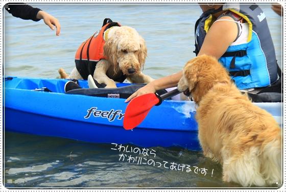 2011,9,30琵琶湖16