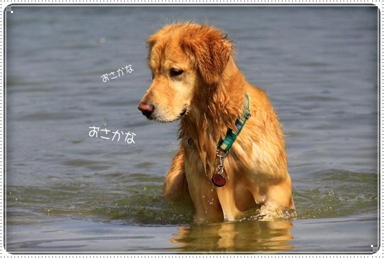 2011,9,30琵琶湖4