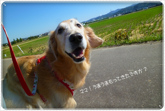 2011,10,4お散歩6